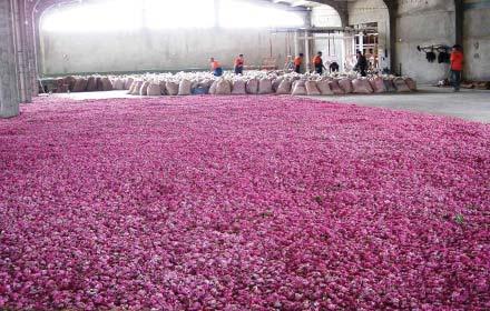 rose-processing