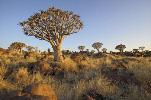 Namib & Prehistory